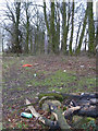 SJ5699 : Remains of campfire in woodland near Long Covert, Downall Green by Gary Rogers