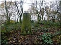 SE3806 : Ardsley Trig Point by Rude Health