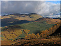 NM9752 : Coniferous plantations of Salachan Glen by Trevor Littlewood