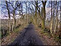 SJ8280 : Rotherwood Road by David Dixon
