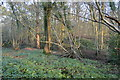 TQ1937 : Horsegills Wood by N Chadwick