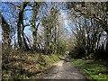 SX2974 : Lane north of Uphill by Derek Harper