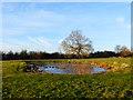 SP7809 : Pond in pasture, Ford by Andrew Smith
