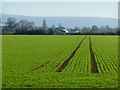 SP8110 : Farmland, Stoke Mandeville by Andrew Smith