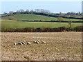 SP8123 : Farmland, Dunton by Andrew Smith