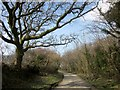 SX2090 : Lane to Warbstow Cross by Derek Harper