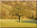 SU7493 : Tree in pasture, Stokenchurch by Andrew Smith