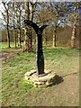 SD6526 : Millennium Milepost at Witton Park by David Dixon