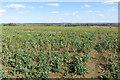 SP9949 : Footpath to Top Farm by Philip Jeffrey