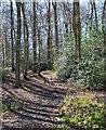 SU8288 : Shillingridge Wood, Chisbridge Cross, Buckinghamshire by Oswald Bertram