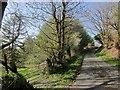 SX1985 : Lane to Tregulland by Derek Harper