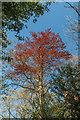 TQ2897 : Colourful tree, Trent Park, London N14 by Christine Matthews