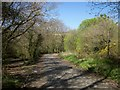 SX2871 : Old road and older road near Upton Cross by Derek Harper