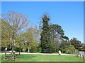 TQ6001 : Trees at entrance to Hampden Park by Paul Gillett