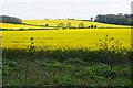 TL1395 : Fields of oil seed rape near Alwalton by Bill Boaden