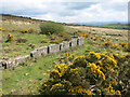 SX3770 : Ruins at South Kithill Mine by Des Blenkinsopp