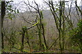 SX5259 : Woodland, Bickleigh Vale by N Chadwick