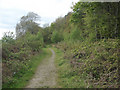 SS7986 : Footpath at woodland edge, Graig Fawr, Margam by eswales