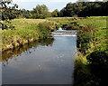 SJ8581 : Weir across the River Bollin, Wilmslow by Jaggery