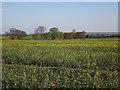 TL3558 : Oilseed rape by Hugh Venables