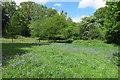 TQ4569 : Bluebells in Park Wood by Des Blenkinsopp