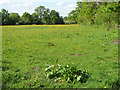 SU9071 : Paddock near Winkfield Row by Alan Hunt