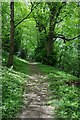 SO3608 : Woodland path, Clytha by Philip Halling
