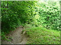 SE1328 : Path in Jagger Park Wood, North Bierley by Humphrey Bolton