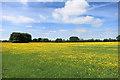 SP7807 : Waldridge's Fields by Des Blenkinsopp