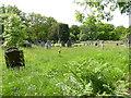 SU8425 : Small graveyard on Iping Road by Shazz
