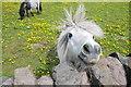 """SJ9349 : """"Flyaway Hair"""" Pony : Week 22"""