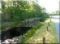 SJ4453 : Lily Pond on the roadside by Eirian Evans