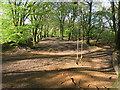 SX3572 : Swing in the Woods by Des Blenkinsopp