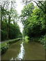 ST7860 : The Kennet & Avon canal SE of Limpley Stoke by Rob Farrow