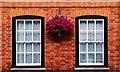SU9677 : Hanging basket of flowers, Eton High Street : Week 27