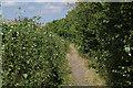 SU9982 : Galleons Lane by Alan Hunt