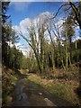 SX3376 : Lane to Trekenner by Derek Harper
