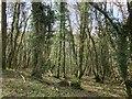 SX3476 : Hollygrove Wood by Derek Harper