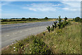 TL1253 : Lay-by on the A421 by David P Howard
