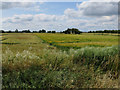 TL3972 : Crop boundary by West Fen Road by Hugh Venables