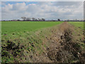 TL6488 : Ditch, Feltwell Anchor by Hugh Venables