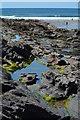 SX1496 : Rock pools at Crackington Haven, Cornwall by Edmund Shaw