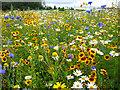 TQ6249 : Meadow at Broadview Gardens : Week 31