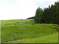 NY3094 : Hillside below Bught Knowe by Oliver Dixon