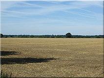TL1643 : Flat farmland near Kingshill Farm by JThomas