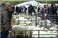 SH5834 : Merioneth County Show 2015 : Week 34