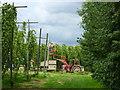 TR0559 : Hop picking, modern style. Boughton-under-Blean : Week 35