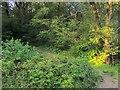 SX2859 : Path in Tregastick Wood by Derek Harper