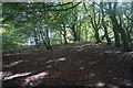 SD6808 : Woodland by Deane Golf Club by Bill Boaden