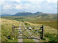 SD1697 : Gated track on Birker Fell : Week 36